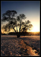 Winter Evening by hquer