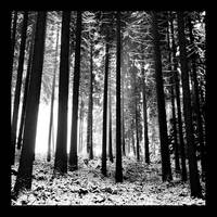 Magic Forest by hquer