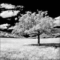 Maigc Tree by hquer
