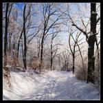 Snow Path by hquer