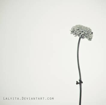 Silence II by lalyita