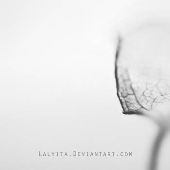 Like a Dream II by lalyita