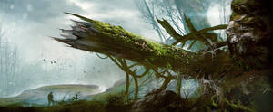 Old tree by ldimonl