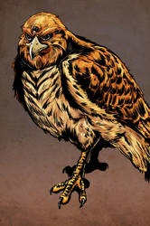 Dark Legacy: Hawk by ChrisJamesScott