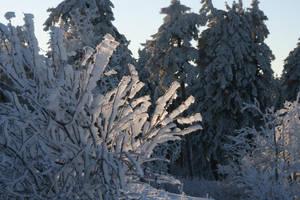 Winter Enlightenment by Indiliel