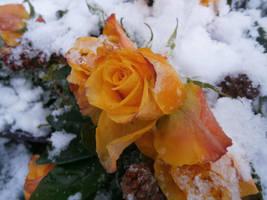 Frozen by Indiliel