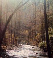 The Golden Wood by SilverInkblot