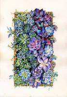 succulentus by Dianna-Varney