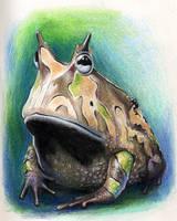 Ceratophrys by Dianna-Varney