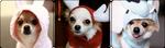 Fluffy Pups by DEUTSCHLIAND-PRUSSIA