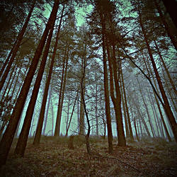 not MIND .Trees by xlostfaith
