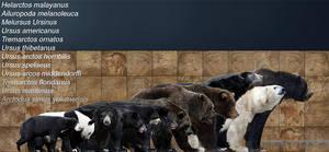 bear species by serchio25