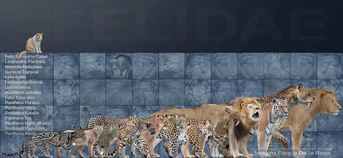 felidae by serchio25