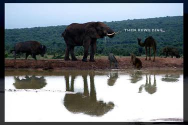 then rewilding... by serchio25