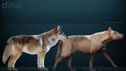 Canis dirus by serchio25