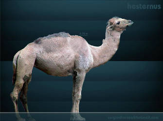 Camelops Hesternus by serchio25