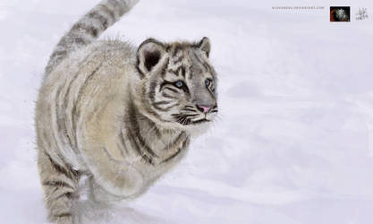 White Tiger cub by KlausBoss
