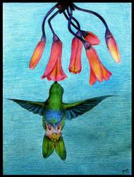 Hummingbird by Aelynn