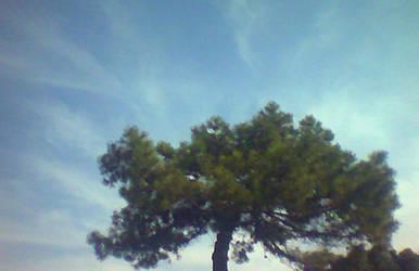 Il cielo sopra il pino by mackley