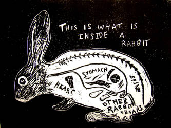 What is inside a rabbit by madamtruffle