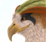 Pidgeot by Sombras-Real-Pokes