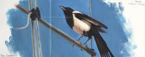 Magpie by makangeni