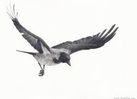 Flying hooded crow by makangeni