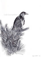 Hooded Crow sketch by makangeni