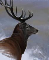 Red Deer I by makangeni