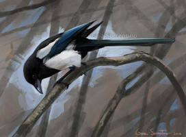 Magpie by makangeni