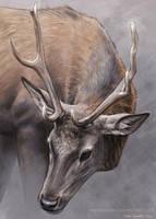 Deer160318 by makangeni