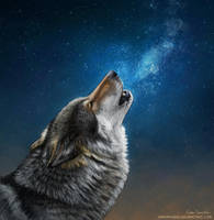 Starry sky wolf by makangeni