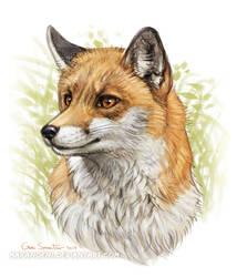 Fox14618 by makangeni