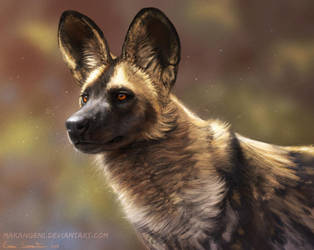 African wild dog by makangeni