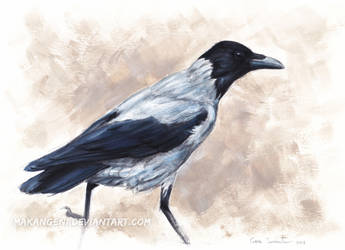 Hooded crow by makangeni