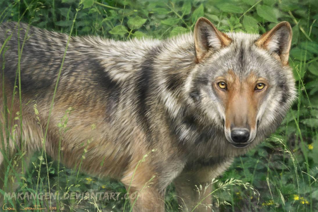 Italian Wolf by makangeni