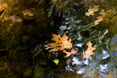 Leaf on the River by switchbladeserenade