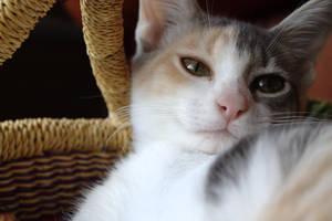 Kitten! by DeepSlackerJazz