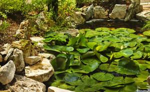 Pond I by DeepSlackerJazz