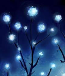 Shine by Miraris