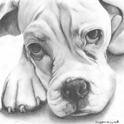 Bulldog Puppy by Rayquazanera