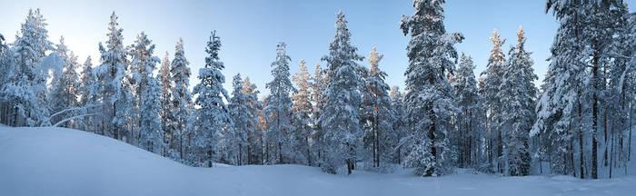 Snow forest by JuhaniViitanen
