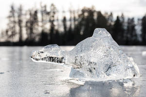 Ice turtle by JuhaniViitanen