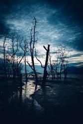 Muddy beach and dead forest by JuhaniViitanen