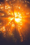 Sunbeams by JuhaniViitanen