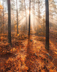 Foggy morning by JuhaniViitanen