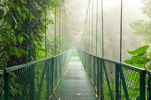 Cloud forest bridge by JuhaniViitanen