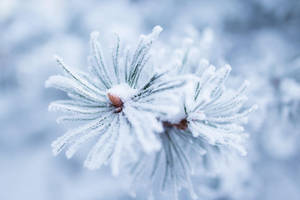 Winter flower by JuhaniViitanen