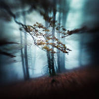 Blue Morning by xavierrey