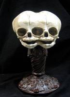 Conjoined Twins Fetal Skull Display by DellamorteCo